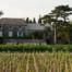 MAS_dentelles-de-montmirail-vigne-vignoble-vallee-du-rhone-odile-couvert-vins-des-cotes-du-rhone-1-plan-de-dieu-chambre-d-hotes-domaine-de-l-odylee000001